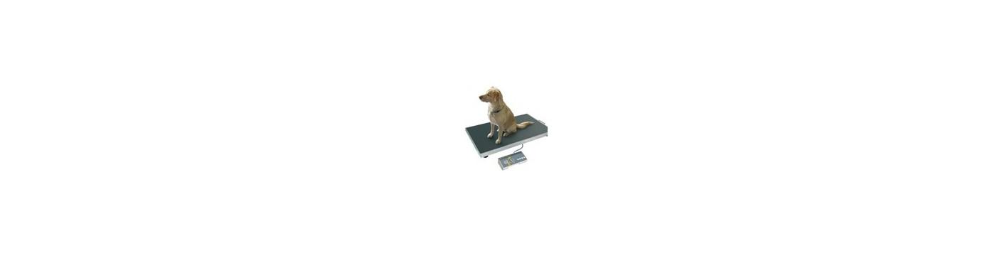 Tierwaagen und Veterinärwaagen mit speziellem Tierwägeprogramm